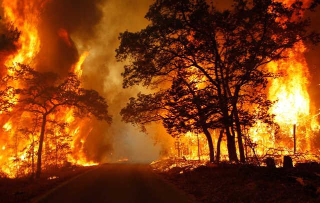 Po�ar lasu – bezpiecze�stwo zale�y od Ciebie
