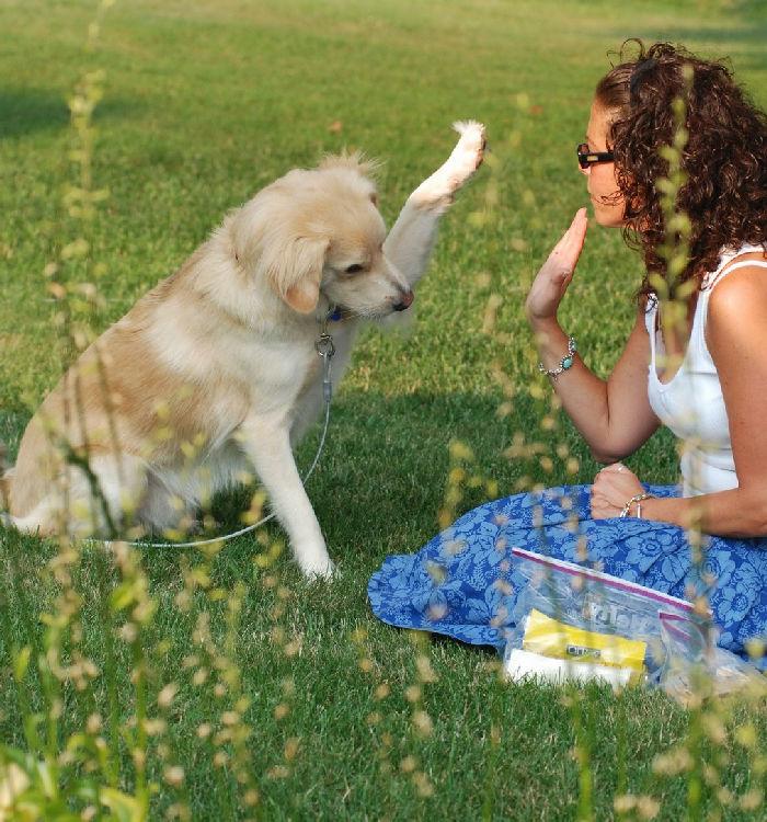 Psi park w Lubinie całkiem realny