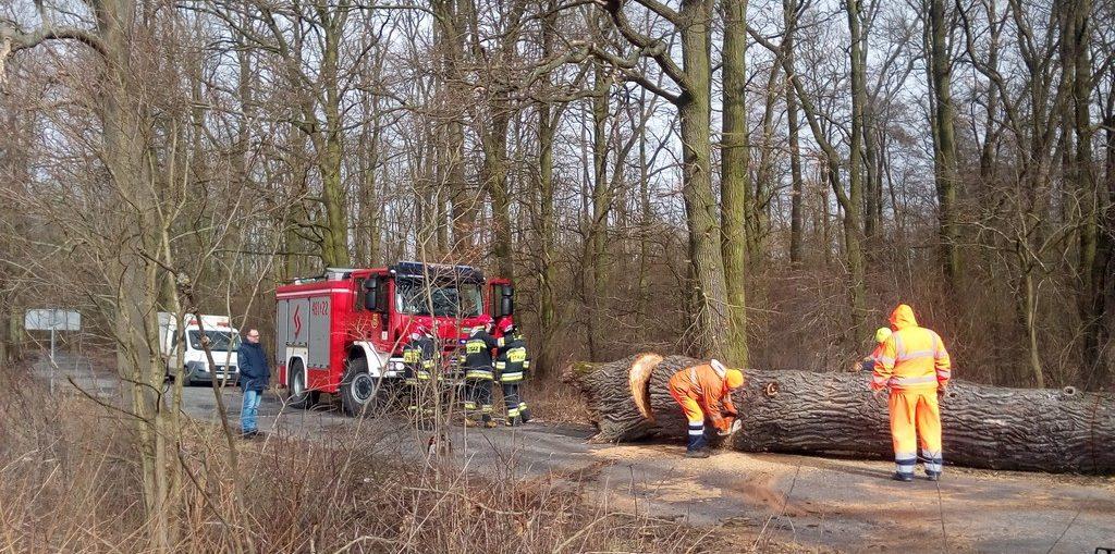 Wichura powaliła drzewo w Księginicach